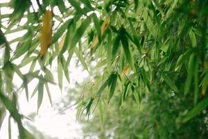 Bambus - Nachhaltige Pflegeprodukte